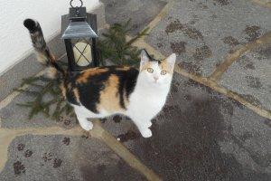 Kätzchen Flecki mit neugierigem Blick
