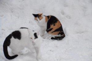 Klein Maxi und Flecki im Neuschnee