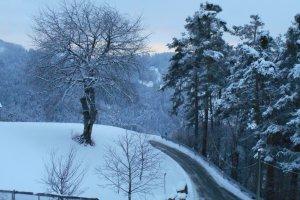 Neuschnee am Heideggerhof - Blick auf Kirschbaum und Föhrenwald