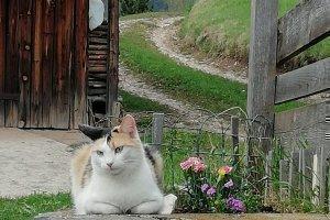 Kätzchen Flecki ruht sich aus