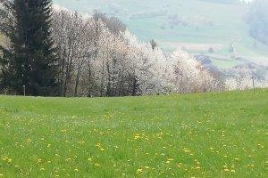 Frühling in Völs am Schlern