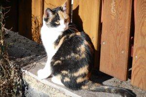 Hofkatze-Susi-beim-Sonnenbaden