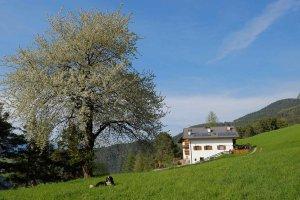 Frühlingserwachen - Kirschbaumblüte am Heideggerhof